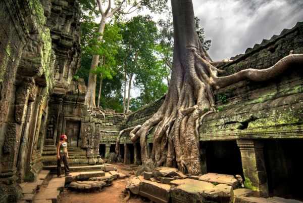 Image result for Ta Prohm