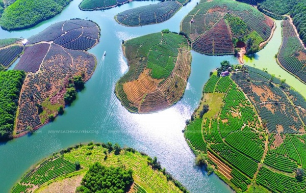 oc-dao-che-thanh-chuong-nghe-an-pys-travel002_001