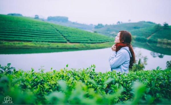 oc-dao-che-thanh-chuong-nghe-an-pys-travel003