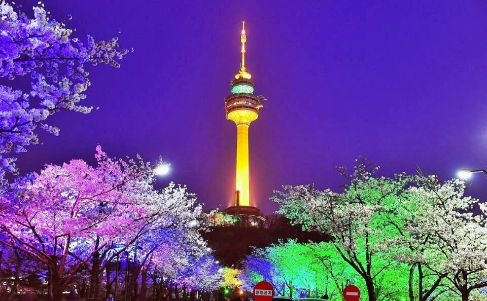 Cherry Blossom N Seoul Tower.jpg