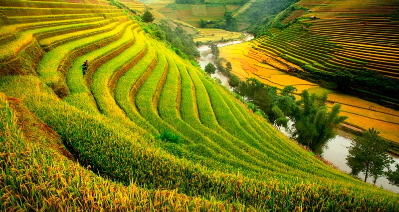 tour-mu-cang-chai-ys-travel002.PNG
