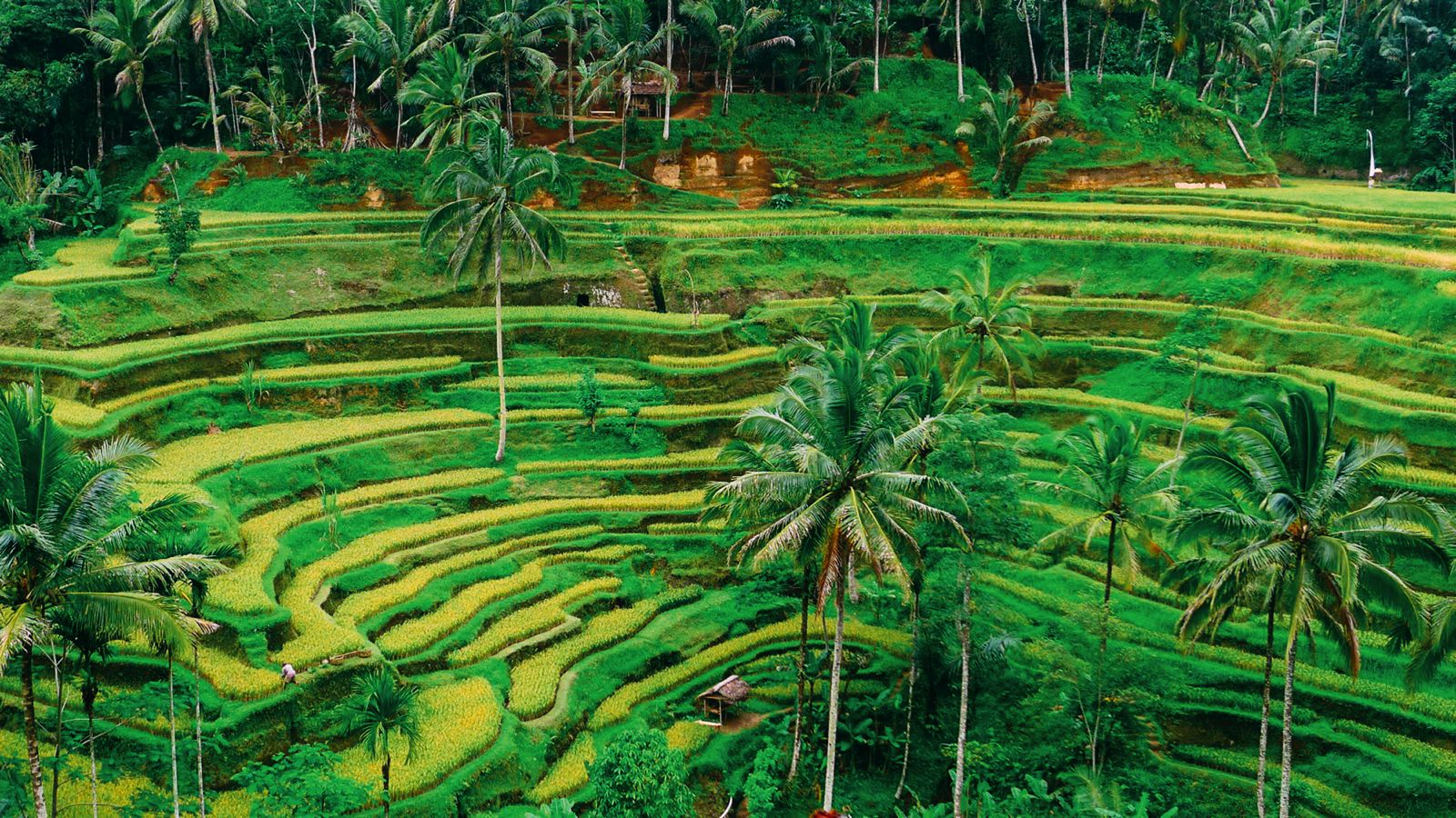 Tegalalang-Rice-Fields